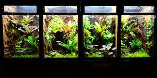 neherp vivarium lighting kits
