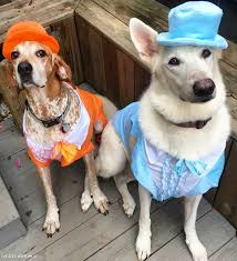 A Dumb And Dumber Hound Oween Life With Arie