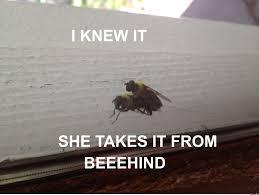 Sweetest Day Meme - sweet sweet bee sex by gigaware meme center