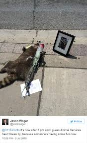 Funny Raccoon Meme - people in toronto made memorial for dead raccoon after city forgot