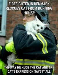 Denmark Meme - firefighter in denmark rescues cat from burning house the memes