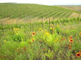 northwest native plants vineyard natural habitats assist with butterfly comeback wsu