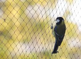 protect your vegetable garden with bird netting clearly golden