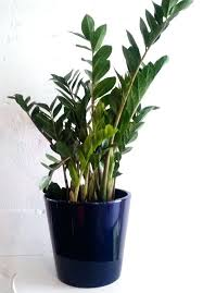 plants that need low light best low light houseplants that are easy to grow the self