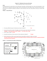 Cell Membrane Worksheet Chapter 3 4 Membrane Structure And Function How Do Substances
