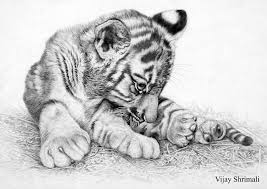 tiger cub by vijayshrimali on deviantart