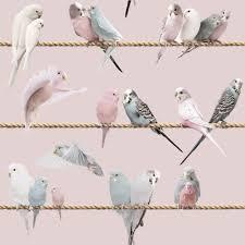 Magnolia Wallpaper by Lovebirds Wallpaper Magnolia Koziel Fr