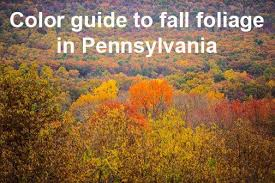 trees turn color fall guide fall foliage
