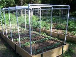 Make Your Own Cucumber Trellis Pvc Bean Or Cucumber Trellis Gardening Pinterest Cucumber