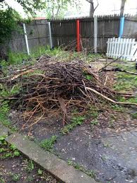 how to cleanup storm debris in indianapolis