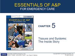 ap chapter 5 mclaren