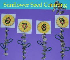 sunflower seeds counting sticks preschool kindergarten math