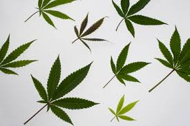Colorado Flag Marijuana Marijuana Time