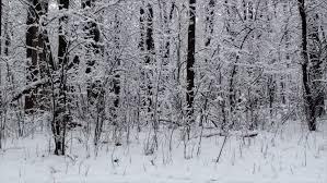 falling snow in the winter forest motion 120 fps stock