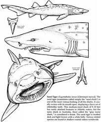 shark attack coloring pages shark attacks sharks