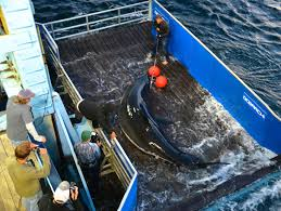 where will the great white shark celebrity mary lee go next