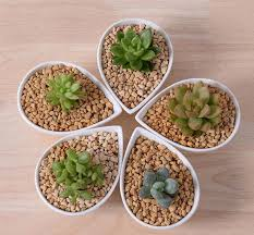 Cheap Small Flower Pots - aliexpress com buy great idea for small plants cute white