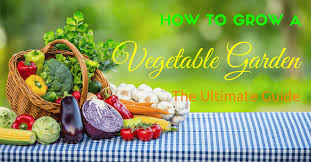 how to grow a marvelous vegetable garden for beginners the