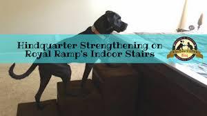 gentle climbing with indoor dog ramp u0026 stairs giveaway