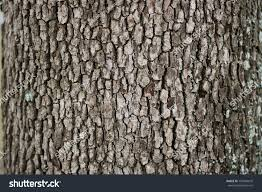 wood tree texture background pattern stock photo 130984610