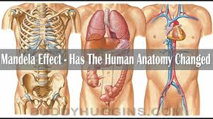 The Human Anatomy Pictures Mandela Effect Has The Human Anatomy Changed Youtube