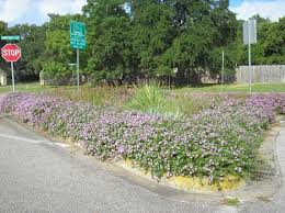 beautification committee highland park west balcones area