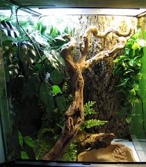 my new white s tree frog setup reptile forums