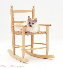Cat Under Chair Silver Exotic Cat Under A Stool Photo Wp11633