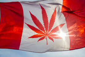 what is thanksgiving in canada legalized marijuana in canada would be worth up to 22 6b per year