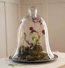 here u0027s a closed terrarium with a bell shaped glass cover house