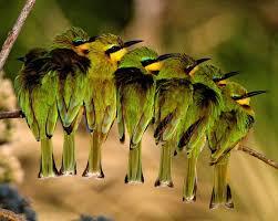 wildlife images Wildlife photography courses jpg