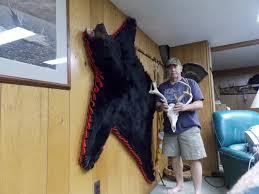 bear rug on wall rug designs