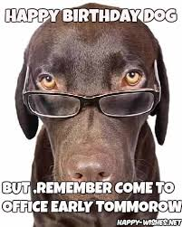 Happy Birthday Meme Dog - happy birthday wishes for dog quotes images memes happy wishes