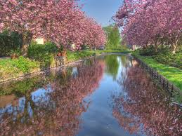 flower green trees sesons pink reflection landscape popular nature