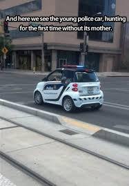 Funny Car Memes - 461 best car memes images on pinterest ha ha funny stuff and