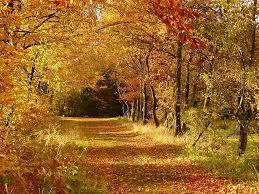 beautiful colorful autumn leaves public domain free photos