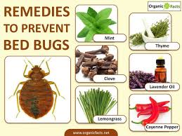 natural bed bug remedies 12 surprising home remedies to prevent bed bugs organic facts