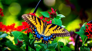 butterfly and garden flowers wallpaper allwallpaper in 7699