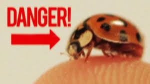 strange facts about thanksgiving badass facts about ladybugs youtube