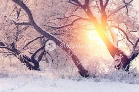 morning frosty winter morning bright winter sun