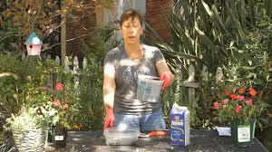 how to add epsom salt u0026 coffee grounds to potting soil garden