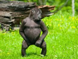 Dancing Black Baby Meme - dancing monkeys youtube