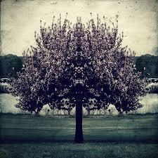 vintage tree by perception obscure on deviantart