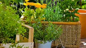 Easy Herbs To Grow Inside The Best Herbs To Grow And Eat At Home Health