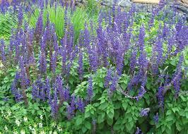 plants native to new jersey pollinator gardening