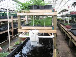 why use trout aquaponics how to aquaponic