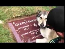 grieving the loss of a dog of dog mourning owner s