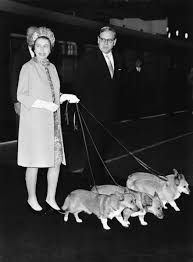 90 years of queen elizabeth looking lovingly at corgis racked