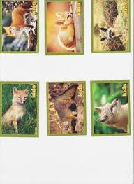free 6 national geographic trading cards foxes trading