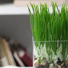 Home Decoration Plants by Online Get Cheap Shoots Plants Aliexpress Com Alibaba Group